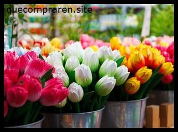 Una cesta de tulipanes como souvenir